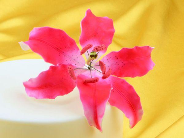 Feinzucker Blüte Lily dark pink spray