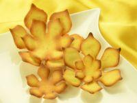 Hippenschablonen Magnolie 5-teilig