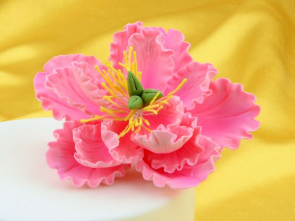 Feinzucker Blüte Peony pink