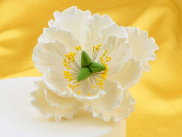 Feinzucker Blüte Peony white