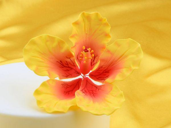 Feinzucker Blüte Hibiscus Giant
